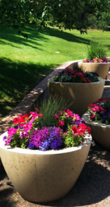 denver commercial landscaping
